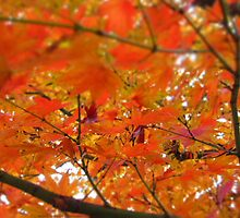 Autumn Explosion  by Maddy O'Brien