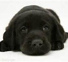 Black Labador Puppy by SportsUnlimited