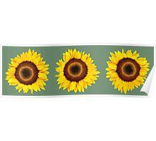 Sunflowers IV Poster