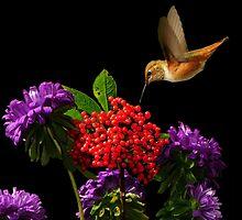 NATURES WONDERS~ by RoseMarie747