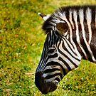 Zebra by Bami