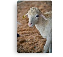 Soft as Lamb Canvas Print
