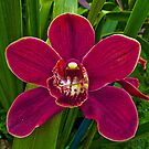 Orchid Red by Tom Newman