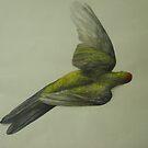 Parrot by Nestor