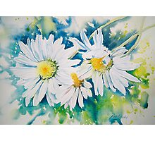 Lazy Daisies Photographic Print