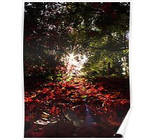 Autumnal Beams Poster
