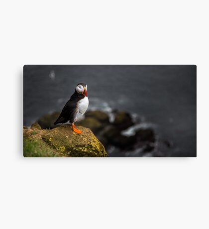 Wild Birds: Puffin on a Cliff, Iceland Canvas Print