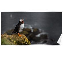 Wild Birds: Puffin on a Cliff, Iceland Poster