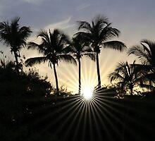 Palm Court by John Dalkin