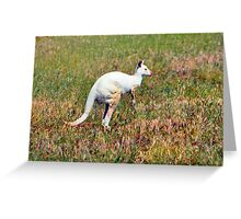 Albino Kangaroo Greeting Card