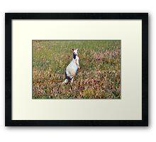 Albino Kangaroo 2 Framed Print
