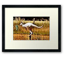 Albino Kangaroo 3 Framed Print