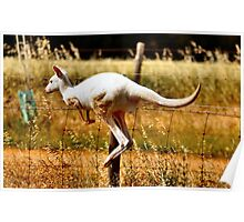 Albino Kangaroo 3 Poster