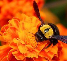 a fur bee!!!  by chiaraSibona