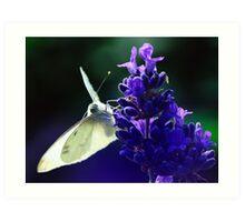 Butterfly on lavender. Art Print