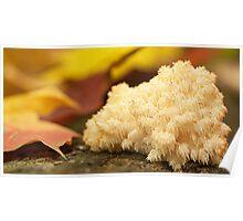 coral shroom Poster