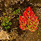 Red Leaf with Clover by Lisa G. Putman