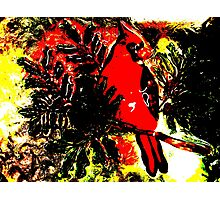 Christmas Cardinal Photographic Print
