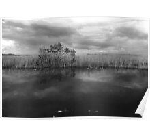 Florida Swamp Land Poster