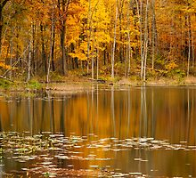 Finster Lake - Golden Pond by Mike Koenig