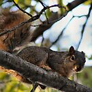 Squirrel by Keala