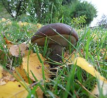 Birch Bolete October by PierPhotography