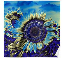 Blue Sunflower Poster