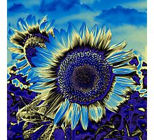 Blue Sunflower Photographic Print