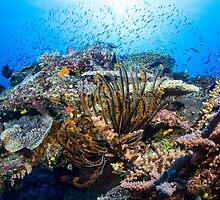 Reef Life by Mark Rosenstein