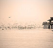 Flock to Sea by Michael Damanski
