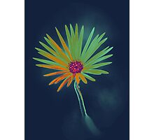 Blue Daisy Flower Photographic Print