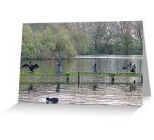 4 Cormorants and a Coot. Greeting Card