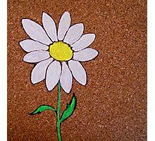 corkboard daisy Photographic Print