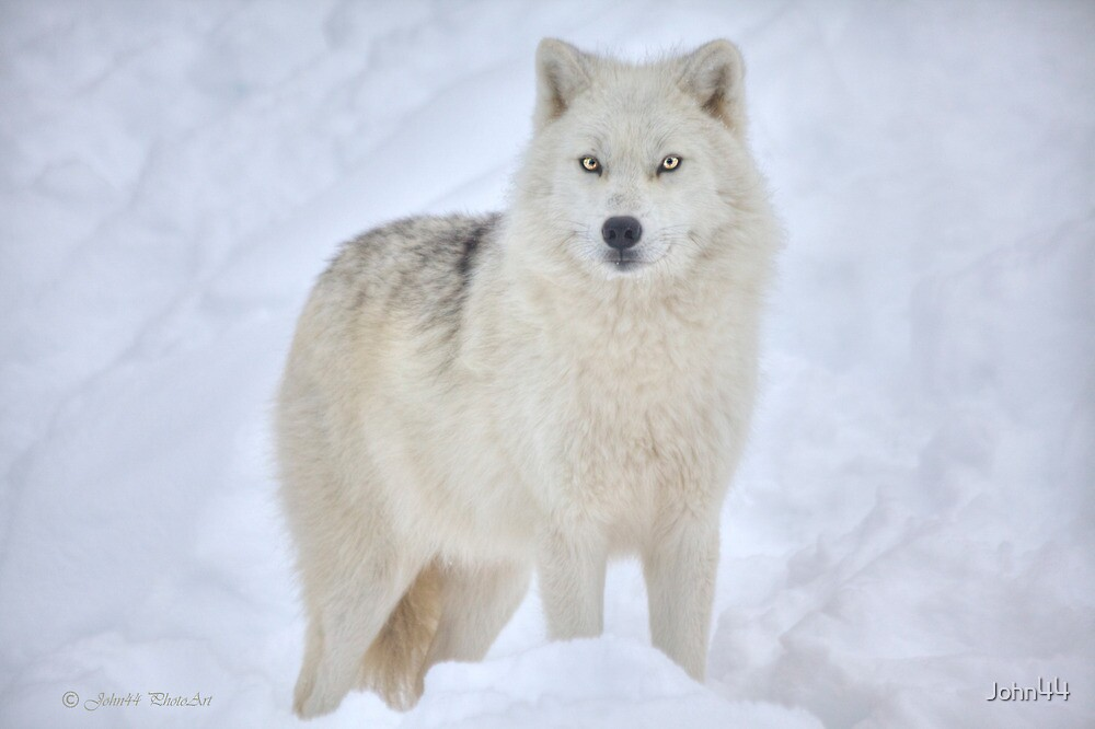 ...the season of the Wolf...     [FEATURED 6x) by John44
