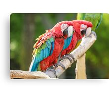 Red and Blue macaw Canvas Print
