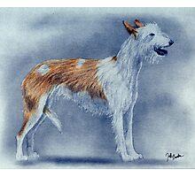 Ibizan Hound Dog Photographic Print
