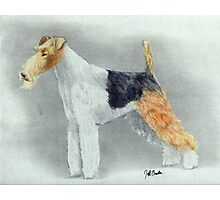 Wirehaired Fox Terrier Dog Photographic Print