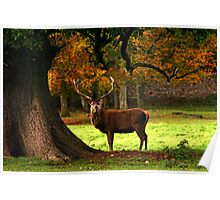 Fountains Abbey Stag Poster