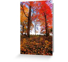 The Haybales and the Woodlot Greeting Card