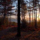 Dawn's Early Light by Steve Mezardjian