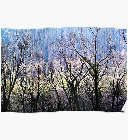 Spectral Trees. Poster