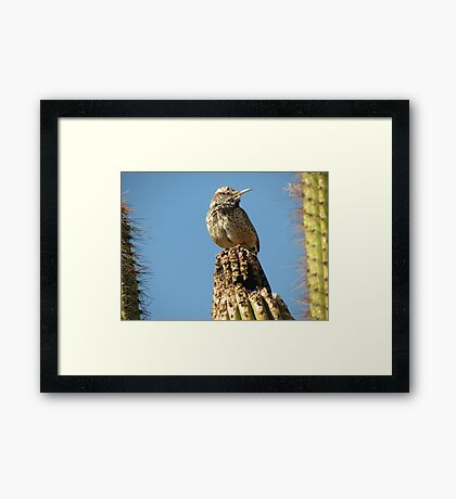 Cactus Wren on Lookout Framed Print