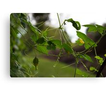 Threads of Nature Canvas Print