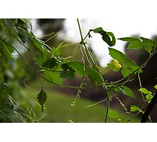 Threads of Nature Photographic Print