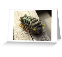 stingy bug Greeting Card