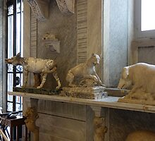Sala degli Animali - Vatican Museum by roger smith