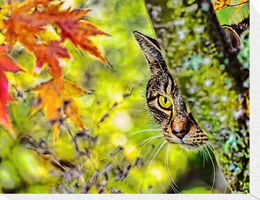 Eye on Autumn by Ken Haley