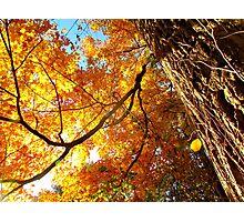 Autumn in New York  Photographic Print