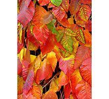 Autumn Cascade Photographic Print