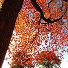Autumn at Pelham Bay Park by Alberto  DeJesus